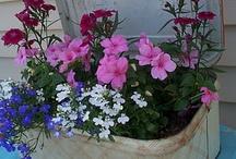 contener garden