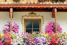 flores preciosas