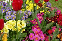 Gardening Tips and Tricks / Random tips and tricks to help you make your garden into a masterpiece.