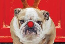 Christmas Dogs / www.poochandcompany.co.uk