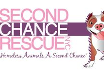 Second Chance Rescue Adoptable Dogs / Check out all the adoptable dogs at NYC Second Chance Rescue.  If interested in fostering or adopting, fill out an application at www.nycsecondchancerescue.org/app-form/
