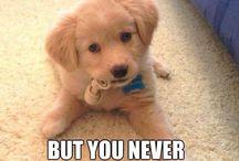 #cute puppy
