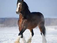Ekaterina Druz Beautiful Horse Pic`s