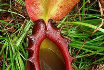 Weird & wonderful plants / Breath taking plants