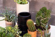 Succulent / My Succulents