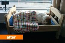 Home Ideas: Pets