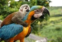 cute animals / by Jennifer Baier