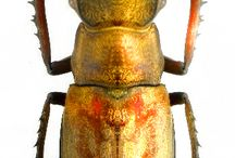 bogár-rovar