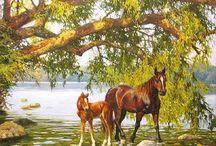 Cavalos1960