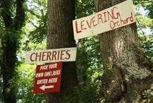 Cherries, I ADORE cherries... / by Jan, blogging at... {jancooks.blogspot.com}