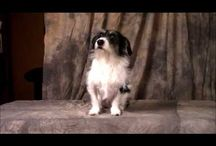Faces of Rescue Videos / Videos created by and for Faces of Rescue with Shutter the Wonder Mutt.