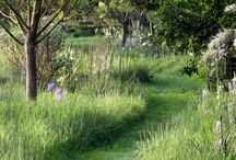 garden, nature
