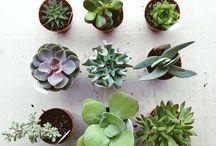 PLANTS/GARDENS/BALCONIES