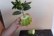 Arvores Frutiferas