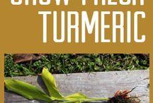Grow turmeric