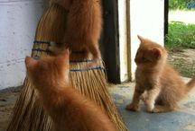 Katte - Huis