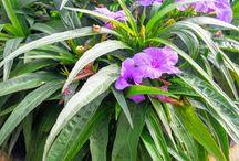 Shade plants and sun plants