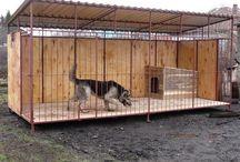 Case pentru câini