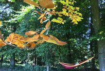Autumn- farbeprächtiger Herbst / Alles rund um den Herbst