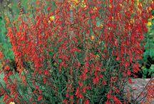 Garden Ideas / by Jeanne Ludwig