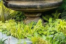 Gardens/plants