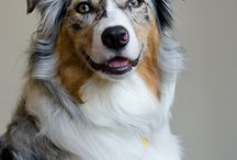 gorgeous images of dogs