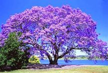 Belas árvores .。.:*♡