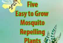 Pesticide Ideas / These ideas helps to keep pest at bay.