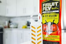 Kill Fruit Flies