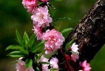 Évszakok: tavasz