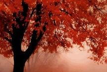 Mooie herfstfoto's