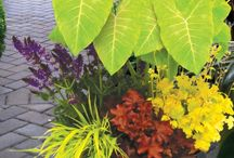 Gardening / Flower Pots   / by Sue Liles