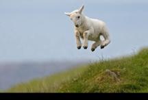 FARM ANIMALS / by Natalie Wise