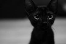 Animals / by Jacqueline Lovik