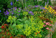 cottage garden/ tuinen