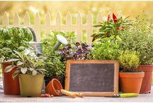 Protección de la casa con plantas