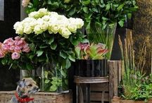 Flower Markets & Shops  / by The Roseberry Cottage ~ Carol