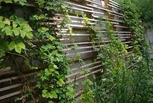 Végétalisation murale