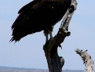 Vogels / Bekijk uitgebreide uitleg over verschillende vogels via: http://www.animalsunited.nl/alle-dieren/vogels/