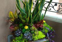 garden for mom