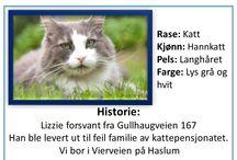 Lizzie Savnet. Bærums Verk / Katten ble levert ut til feil familie på Kattepensjonatet som familien hadde levert inn Katten sin til.