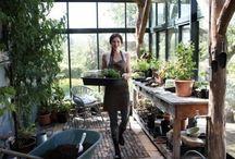 Kjøkkenhage Drivhus