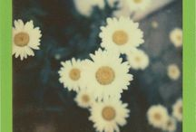 Flower Power / La beauté des fleurs