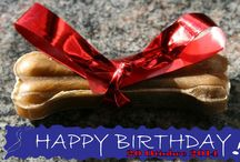 Rhodesian Ridgeback like, 1° compleanno / Ritrovo per festeggiare il 1° anno di vita della cucciolata Rhodesian Ridgeback