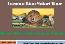 African lion safari toronto / african lion safari toronto   african lion safari hours   african lion safari hamilton   african lion safari vacation packages   Lion safari Tour & Packages