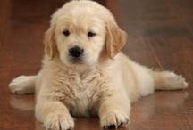 (i want a puppy) / by sydni.