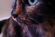 Foto gatti !
