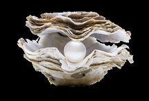 Perle fine / Très rare de nos jours et très coûteuse à l'achat, on retrouve la perle fine sur bon nombre de bijoux anciens. Découvrez les croyances qui l'entourent ainsi que notre collection de bijoux perles fines.