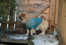 Our cute dog Sid