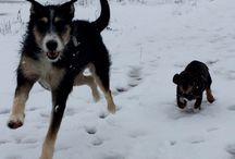 Doggies / Jan & Jane